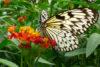 ile papillons